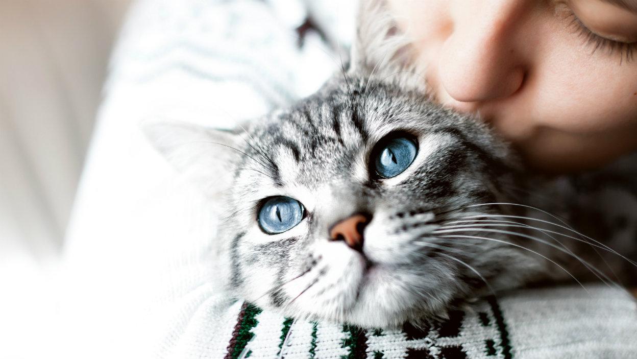 Svetový deň mačiek - ako oslavovať a pomáhať štvornohým priateľom?
